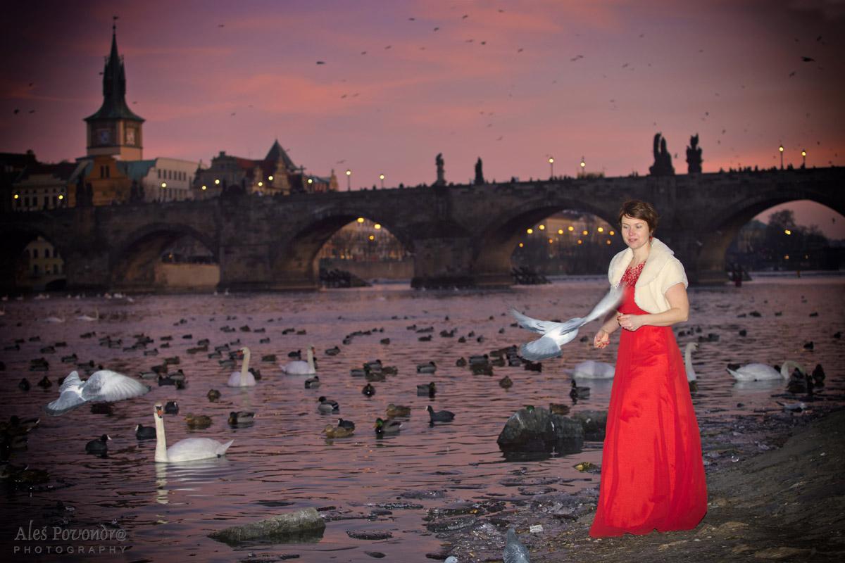 Karlův most a ptáci